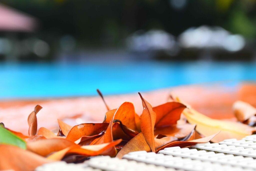 swimming-pool-maintenance-guide-leaves